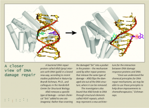 DNA repair enzyme