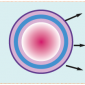 stem cell graphic